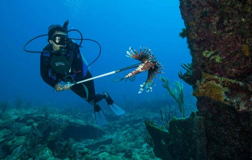 * Photo by Chris Burville