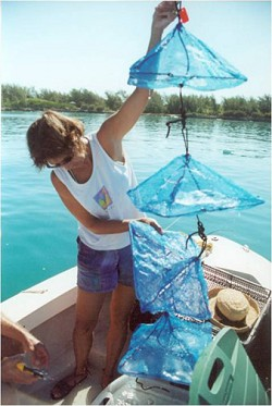Samia Sarkis collects nets of scallops, left to grow in the wild after being produced in a lab, during a BIOS research project into the merits of aquaculture. *Photo supplied